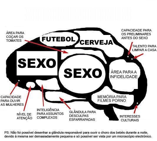 Cérebro Masculino